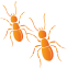 Diagnostics immobilier en Seine Saint Denis termite
